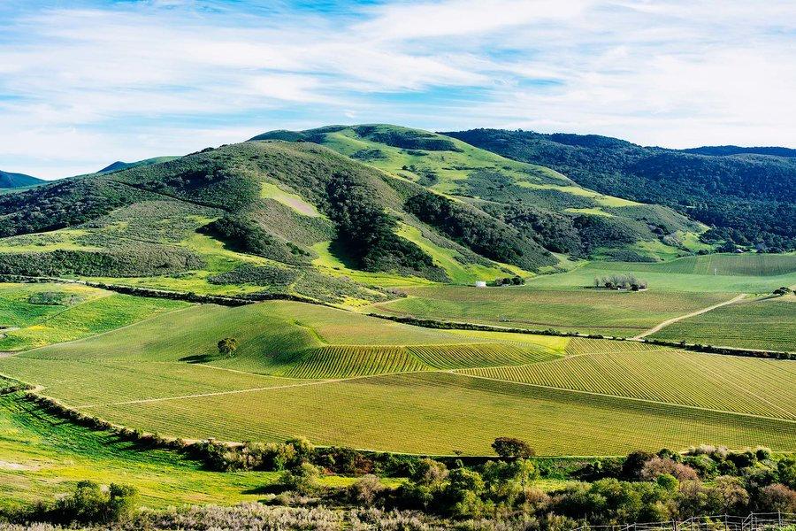 santa-ynez-valley-vineyards-california-S