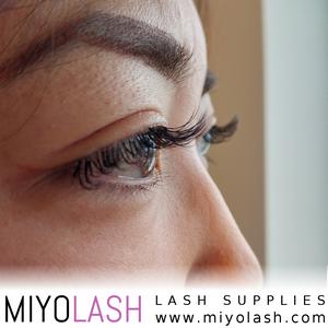 lashes supply