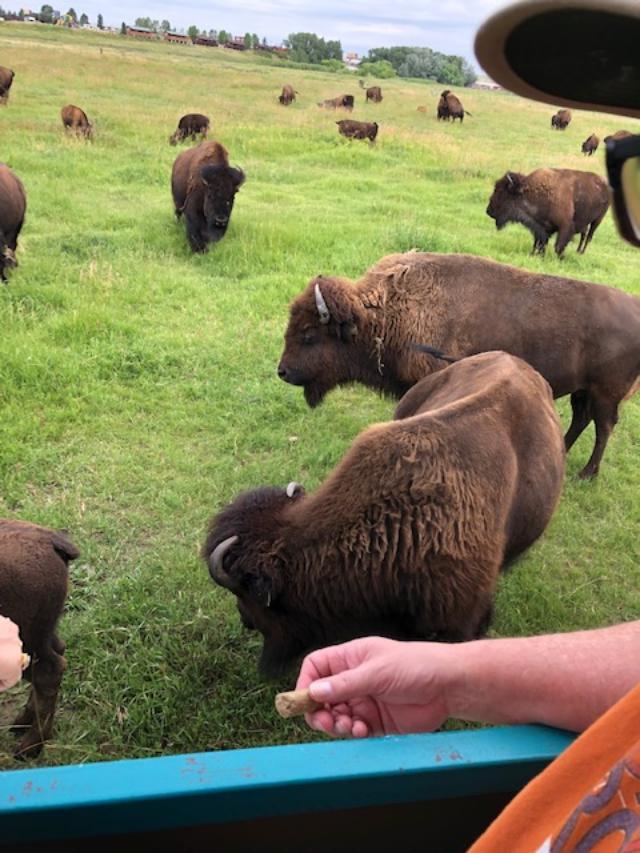the herd 2