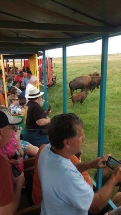 Calling bison
