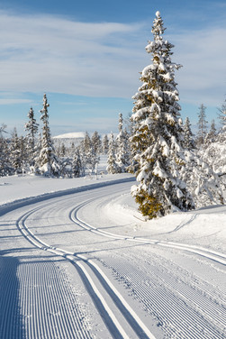 Skidspår Lofsdalen