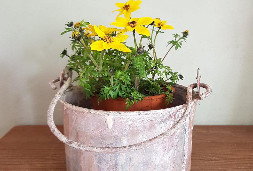 Rustic Paint Pot