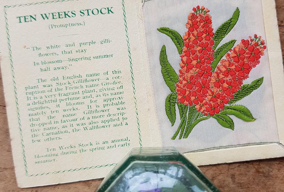 Ten Weeks Stock Silk Flower