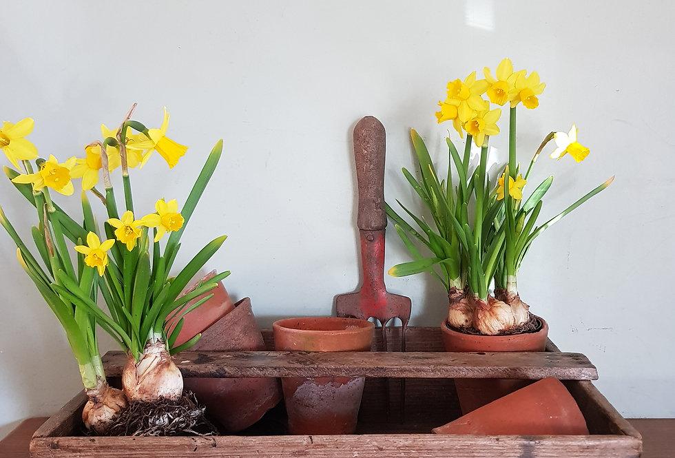 Rustic Garden Trug