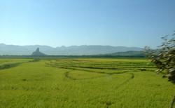 Северная Корея. Рисовые поля