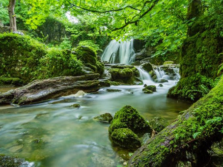 Soaking Up the Goodness of Forest Bathing
