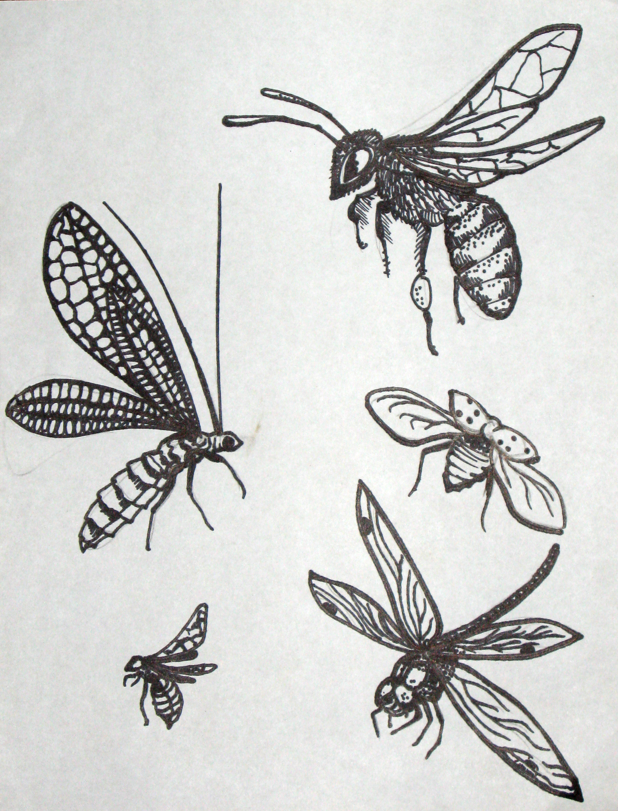 BeneInsects