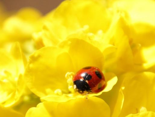 季節と暮らしを楽しむ七十二候『蟄虫啓戸 すごもりのむしとをひらく』