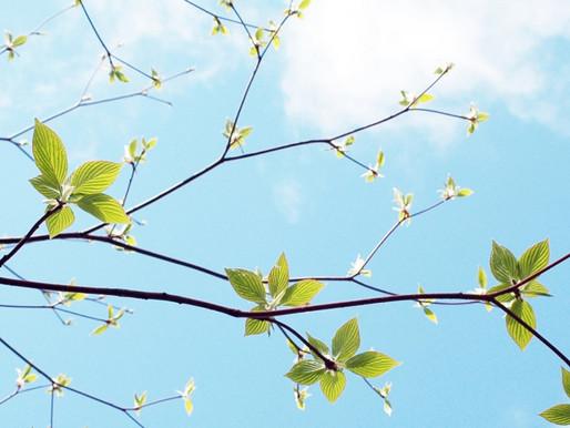 季節と暮らしを楽しむ七十二候『草木萌動 そうもくめばえいずる』