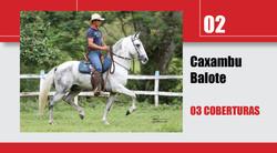 Leilão_Online_Coberturas2