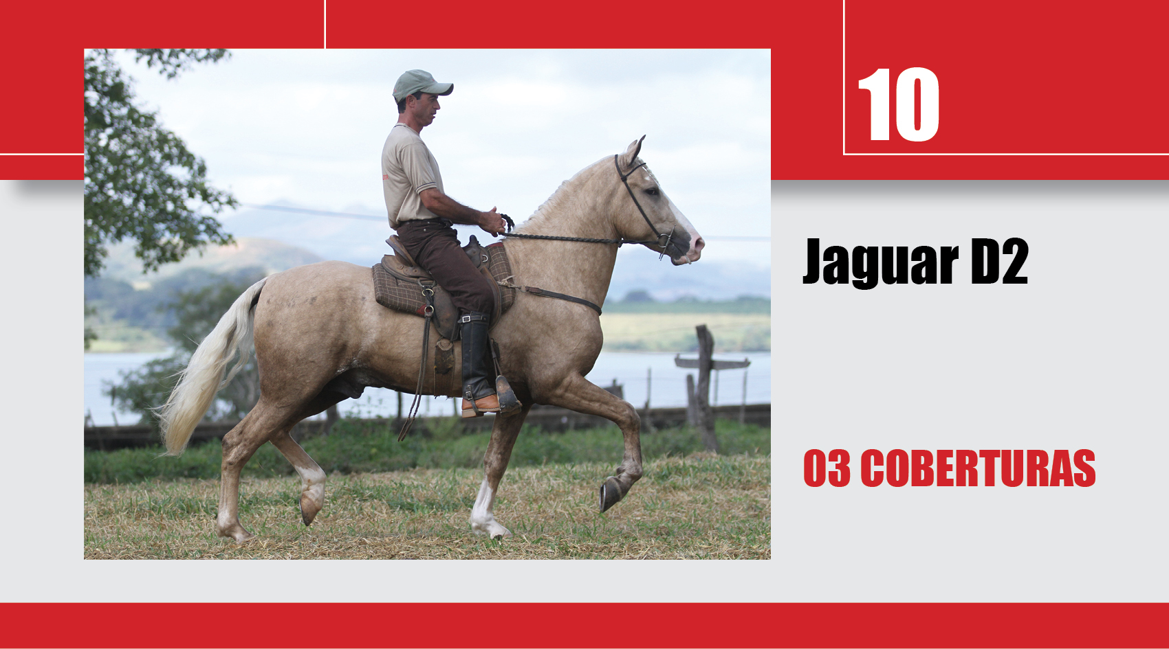 Leilão_Online_Coberturas10