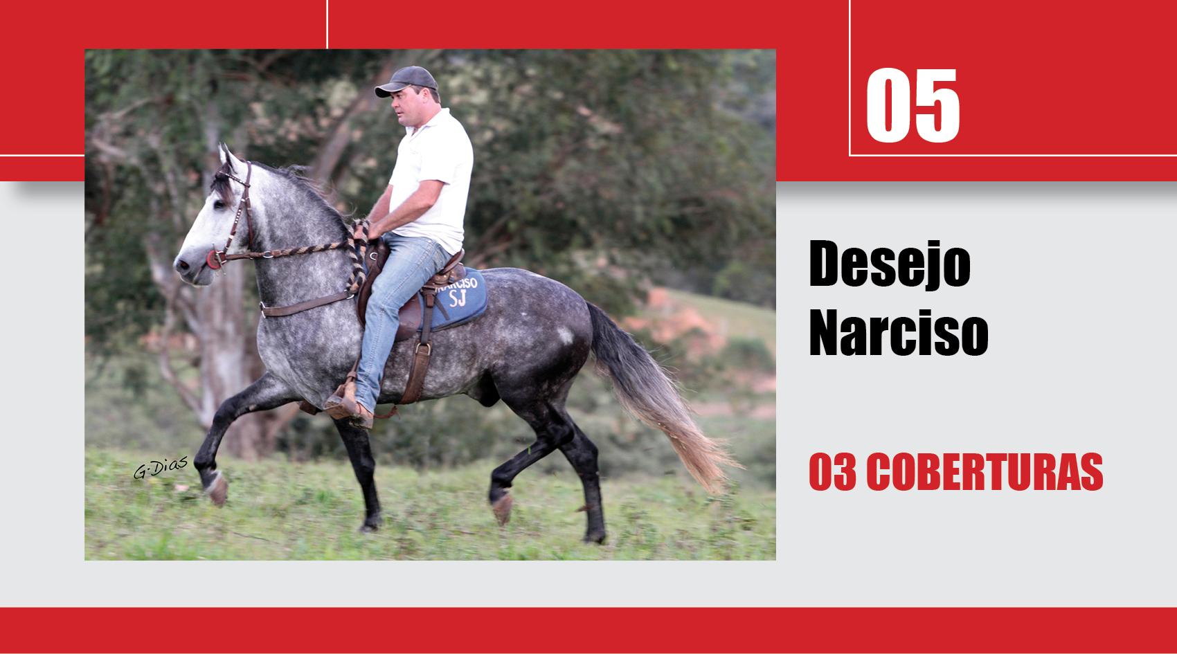 Leilão_Online_Coberturas5