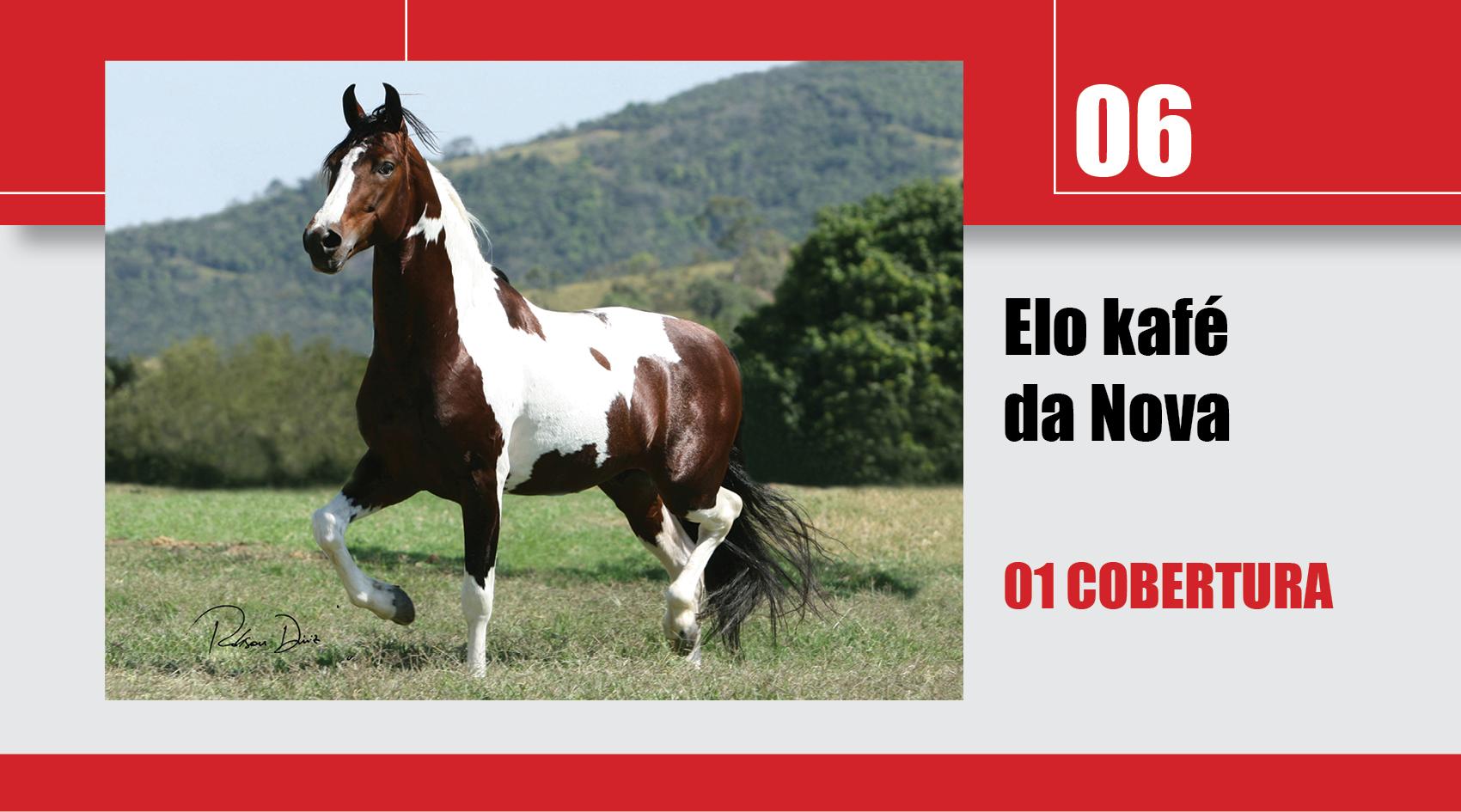 Leilão_Online_Coberturas6