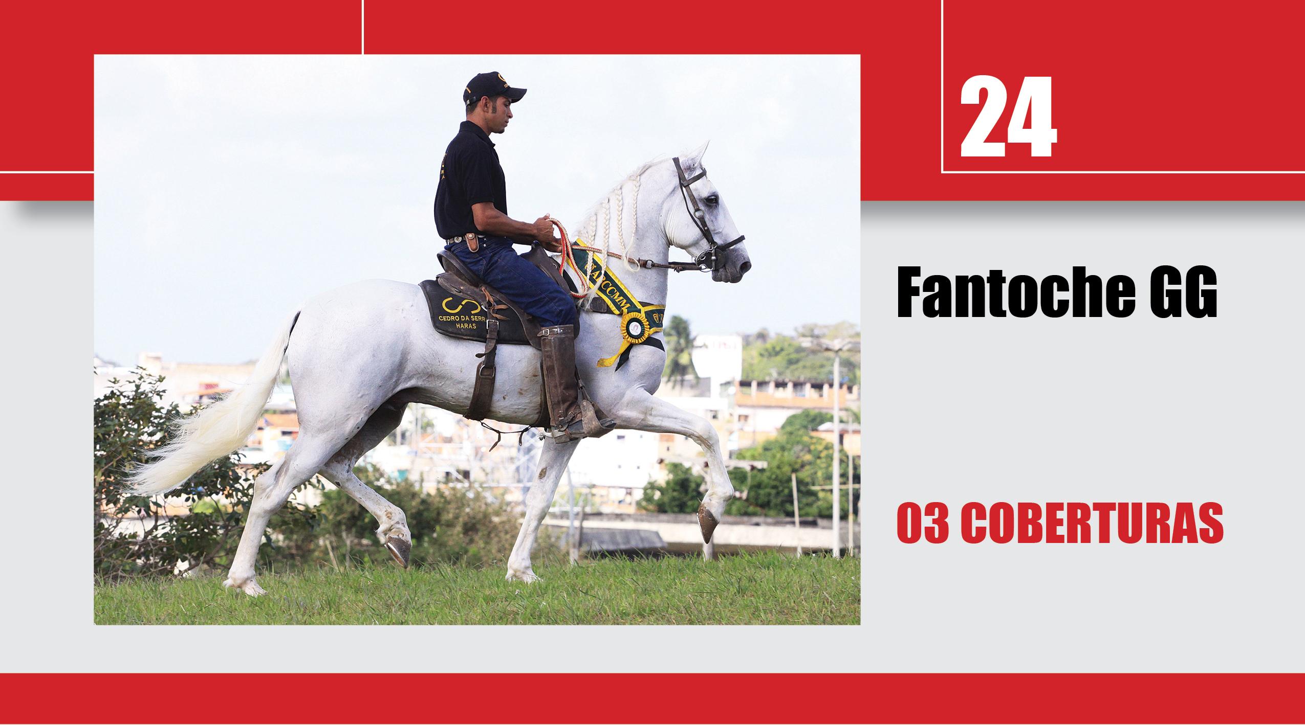 Leilão_Online_Coberturas24