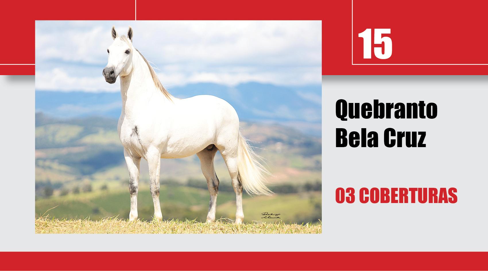 Leilão_Online_Coberturas15