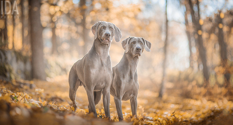 Ukko and Luna
