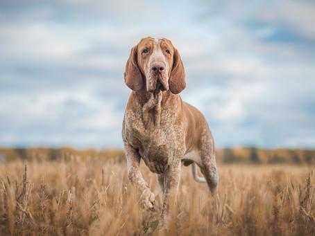 Koiravalokuvaajan kohtaamisia: Kultasydämiä Italiasta