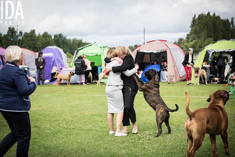 Bullmastiffien ja mastiffien erikoisnäyttely 2017
