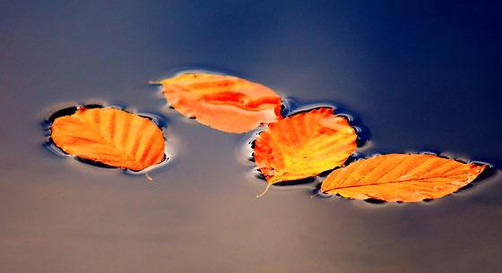 leaves-2912818_1920_edited.jpg