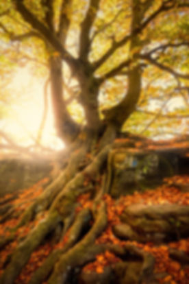 tree-2942469_1920.jpg