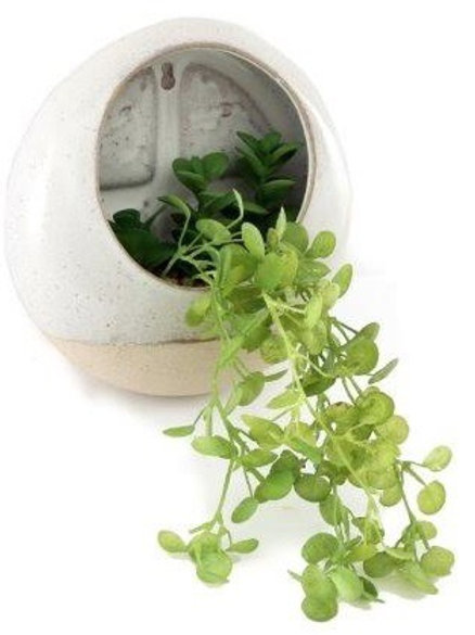 Succulent in round wall pot