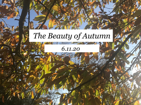 Lockdown Edition: The Beauty of Autumn (Day 2)