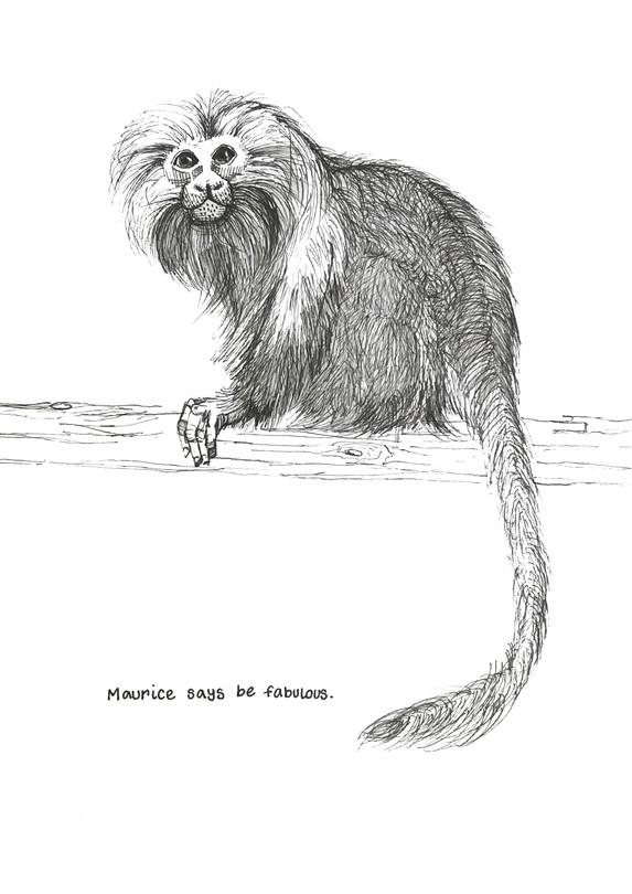 Maurice the Tamarin