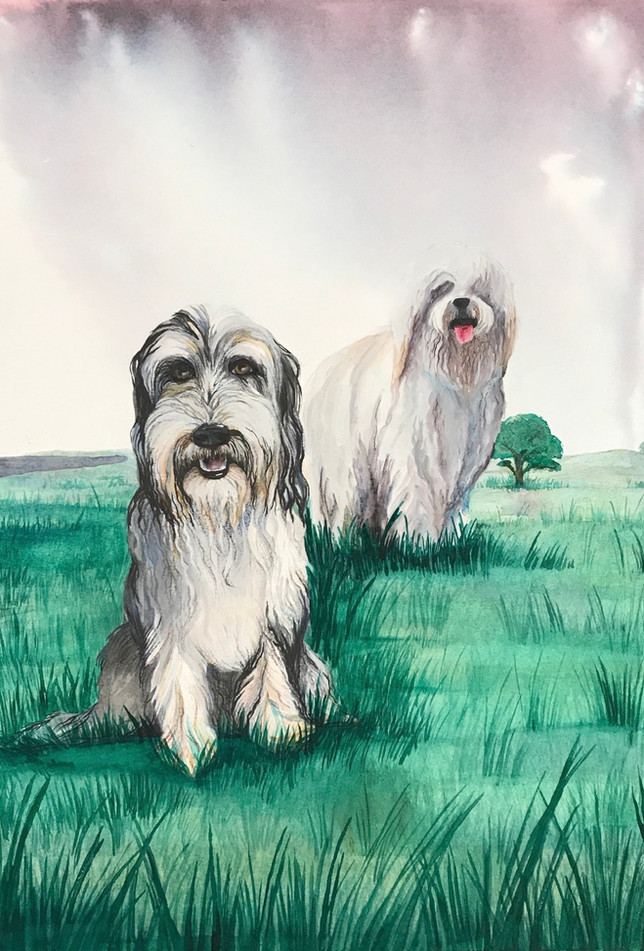 The Dogs on the Hills