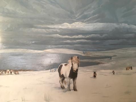 Wild Ponies of Bodmin Moor