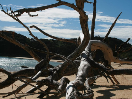 New Zealand Part I: The Sculpture in the Sand