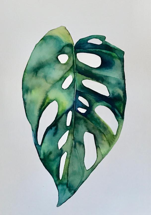 Monstera Green
