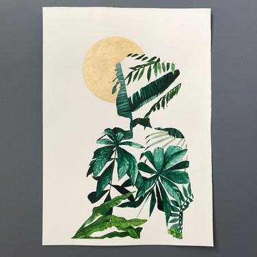 Plants & Inner Peace