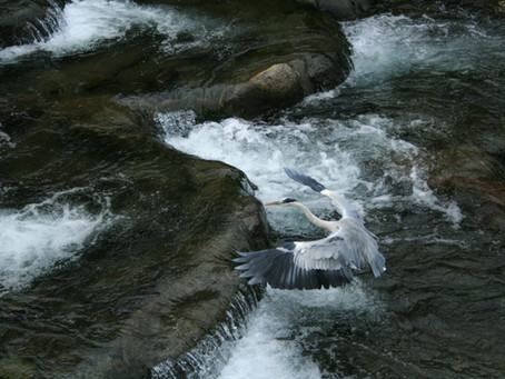 Japan Part 1: The Heron of Hakone