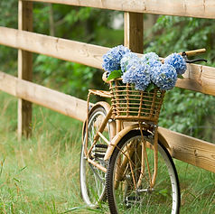 Country Bike Ride