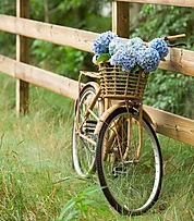 bicicletta in campgna