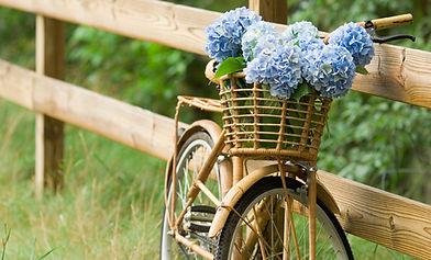 Campagna Bike Ride