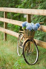 vélo avec panier et bouquet de fleurs champêtres