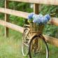 Bike Trail Look