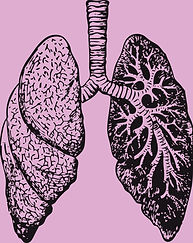 lungs-37824_1280_edited.jpg