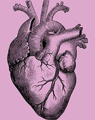 anatomical_heart_edited.jpg