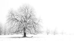 Monochrome tree, Oxfordshire, UK