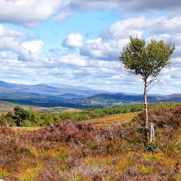 Corrimony, Scottish Highlands, Scotland