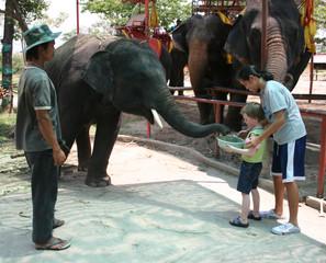 Feeding the Elephants.jpg