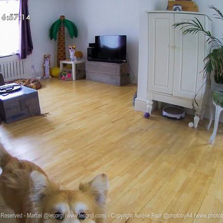Furbo Dog Camera - 2 Years On