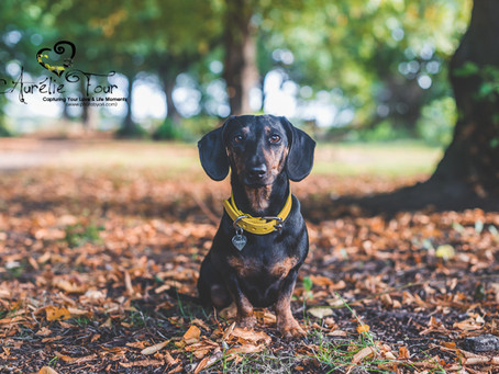 Top 6 Tips to Prepare Your Dog for the Camera