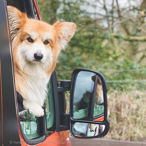 Campervan & Touring with a Dog: A Taster, in London!