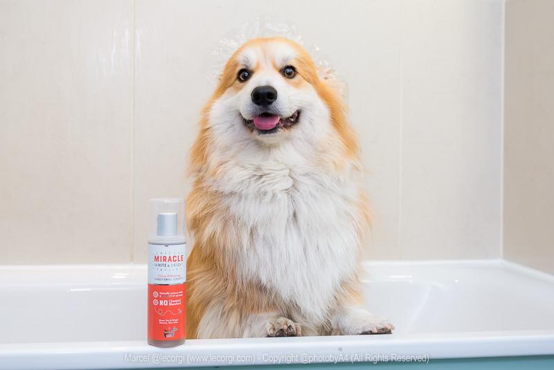 Marcel @lecorgi puts Hownd Shampoo to Le Test