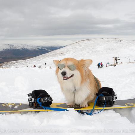 Snowsports & Activities near Fort William (Scottish Highlands)