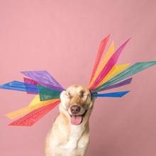 Haute Dogs Calendar
