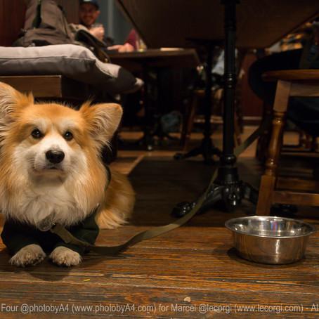 The Dog-Friendly Pub Awards